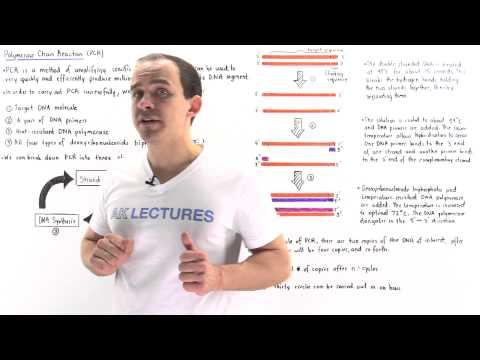720x495 Polymerase Chain Reaction (PCR)