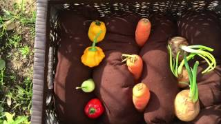 ערוגת ירקות: פעילות מלווה סיפור רצף