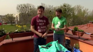 Egynyári, évelő - és fűszernövények a balkonon - Kertbarátok - Kertészeti TV - műsor