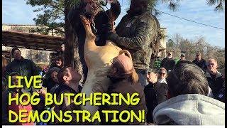Video Annual Hog Butchering Demonstration at the Old South Farm Museum MP3, 3GP, MP4, WEBM, AVI, FLV September 2019