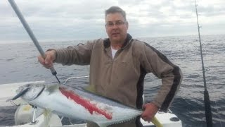 Cape Jervis Australia  City pictures : February 2014 Cape Jervis Yellowtail Kingfish and Bluefin