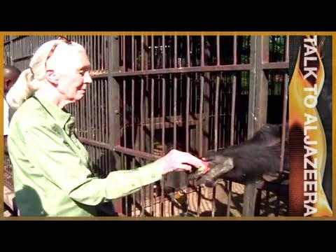 Jane Goodall: Chimpanzees, humanity and all that binds them | Talk to Al Jazeera