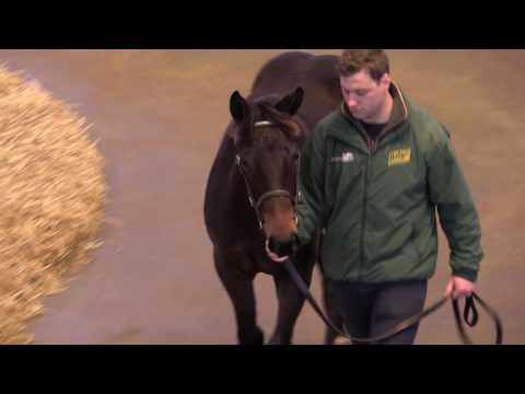 Tattersalls December Foal Sale Day 1 2016
