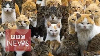 Japan's Cat Island - BBC News