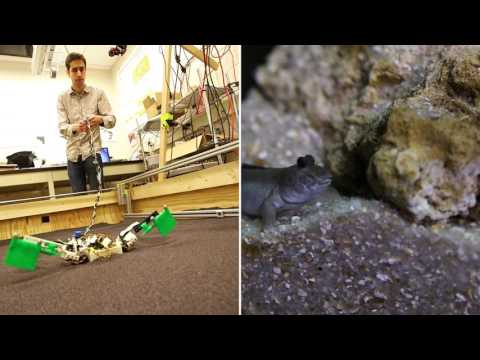 Robot helps study first land animals
