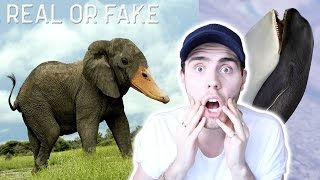 CRAZY PHOTO CHALLENGE [REAL OR FAKE]