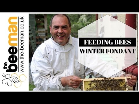 Feeding Honey Bees Winter Fondant