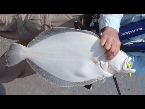 SHORE FISHING - Fishing for fluke casting bucktails and Berkley Gulp Alive from shore. Supports my book http://tinyurl.com/FishingTheBucktail. Shows how to catch flounder fr...