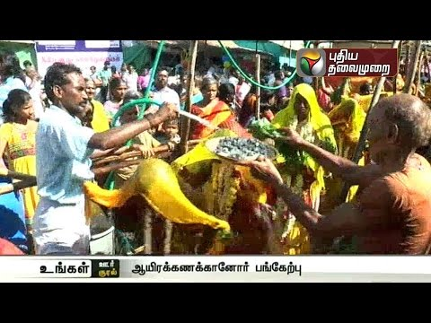 Thousands-of-devotees-participate-in-the-fire-walking-ritual-at-the-temple-function