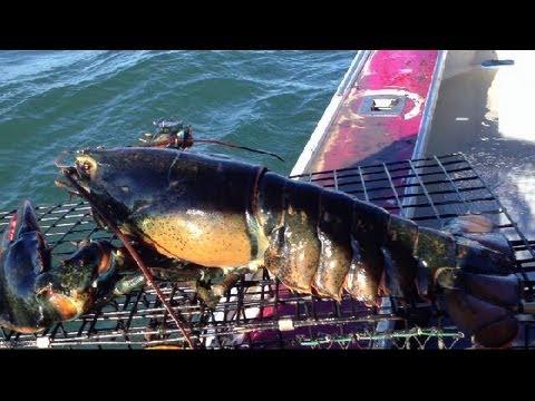 捕獲巨無霸龍蝦的漁夫將牠一翻面卻說「這絕對不能吃」,知道背後原因的網友都驚訝地瞪大了眼睛!