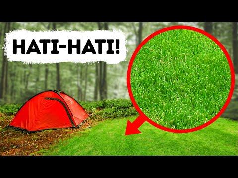 Kalau Kamu Lihat Area Terbuka di Hutan, Segera Kabur!