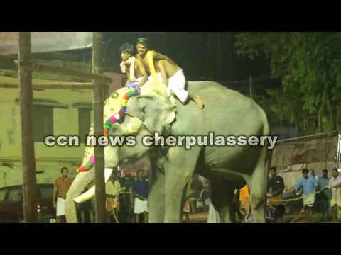 Video cherpulassery puthanalkkal  elephant attack download in MP3, 3GP, MP4, WEBM, AVI, FLV January 2017