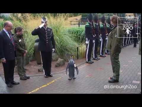 The Highest Ranking Penguin in History