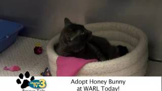 Rescue Tails - Honey Bunny the Cat