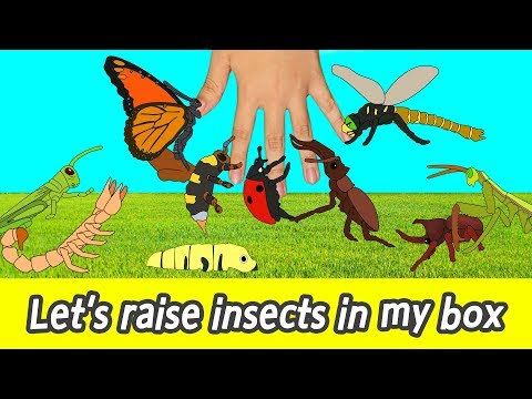 [EN] Let's raise insects in my box! kids cartoon, insects names for kidsㅣCoCosToy