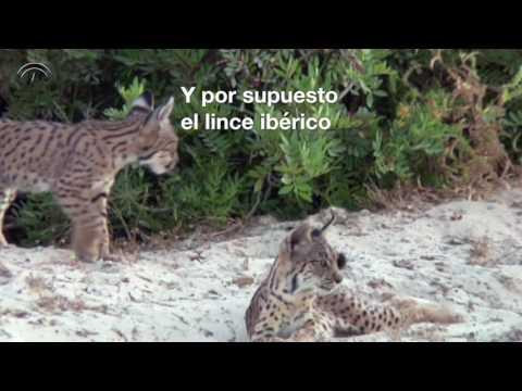 Doñana: La Biodiversidad