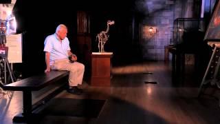 Nonton The Dodo  David Attenborough S Natural History Museum Alive 3d Film Subtitle Indonesia Streaming Movie Download