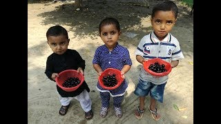 Village Food ❤ Jamun Fruit ❤ Black Plum Fruit Tree In My Village ❤ Village Food SecretsThanks For Watching Like and Share Subscribe for more videos https://www.youtube.com/channel/UCQexaAjPn3-1MCE4DmBK3Tg