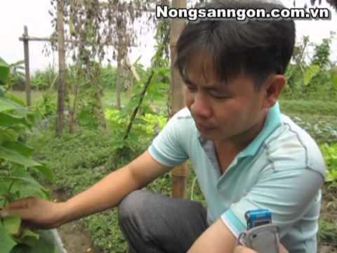 Rau hữu cơ được trồng thế nào
