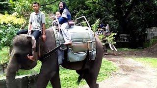 Video Azufi Berani Naik Gajah Di Kebun Binatang Gembira Loka Yogyakarta MP3, 3GP, MP4, WEBM, AVI, FLV Januari 2019