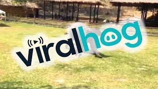 Elephant Comes To The Rescue || ViralHog