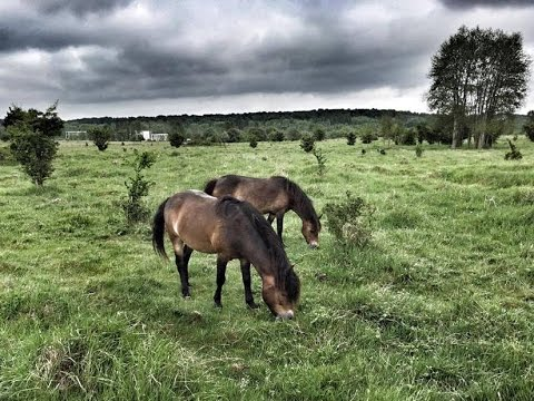 Stádo divokých koní v Milovicích se rozrůstá