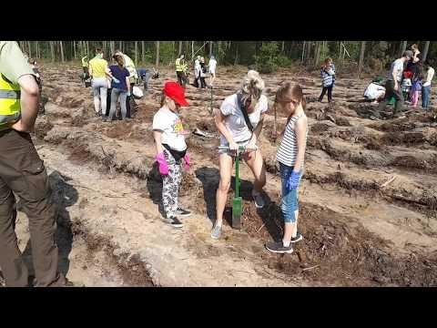 Wideo1: Sadzenie lasu w leśnictwie Nowy Świat