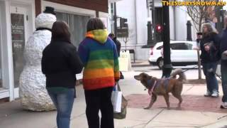 Снежен човек плаши кучета - Уникален СМЯХ!