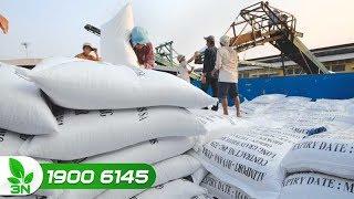Nông nghiệp | Cơ hội mới cho gạo Việt vào thị trường Philippines