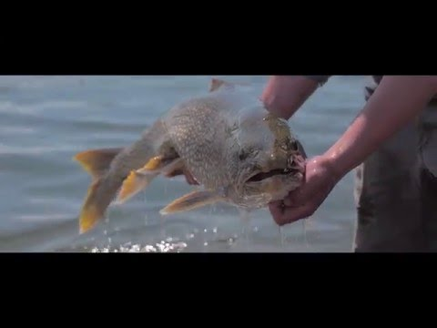 Watch: Lake Trout Fishing