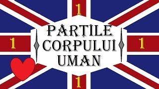 Invata engleza   VOCABULAR   Partile corpului uman- PARTEA 1