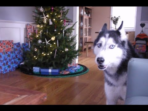 Mishka sings %22Jingle Bells%22