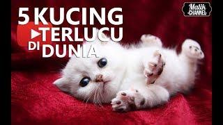 Download Video 5 JENIS KUCING TERLUCU,TERIMUT,TERCANTIK DI DUNIA!!  (PECINTA KUCING) MP3 3GP MP4