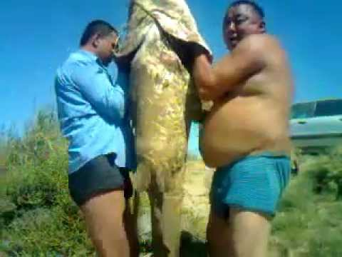 рыбалка туркестан