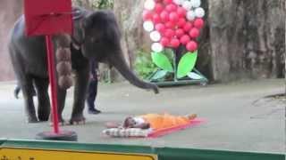 HUGE ELEPHANT MASSAGE SHOW  - BANGKOK - THAILAND - TIGER ZOO