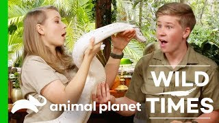 Mischievous Meerkats And An Amazing White Python! | Wild Times by Animal Planet