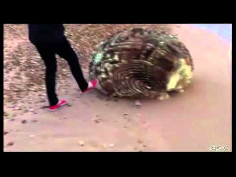 Unknown Creature Washed up on Japan's beach