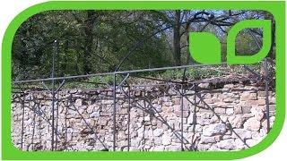 Ippenburger Gartentipps: Die Verwendung der Harrod Fruitcages als Pergola