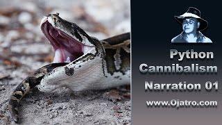 Video Python Cannibalism 01 - Narration MP3, 3GP, MP4, WEBM, AVI, FLV April 2017