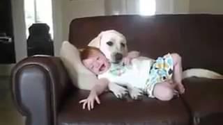 Con Chó Và Baby