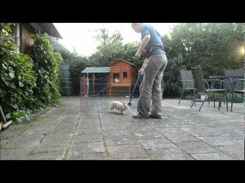 Hoe een konijn leren trainen in een open omgeving