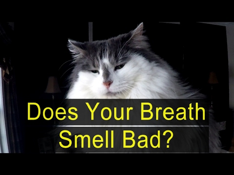 how to tell if your breath smells bad