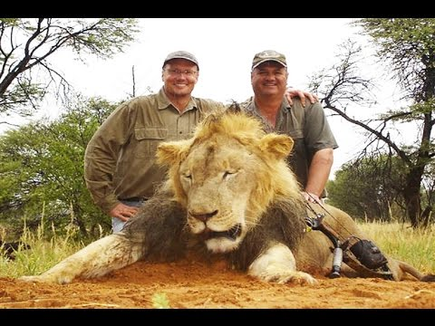 WANTED  American dentist who paid $55000 to kill Africa's most famous lion