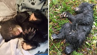 A Hiker Was Given A Warning After Rescuing An Abandoned Bear Cub On An Oregon Trail by Did You Know Animals?
