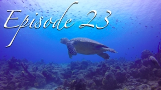 DIVING BONAIRE  WARNING: Pervasive and Extensive Scuba Content! [Sailing Zatara Ep 23]