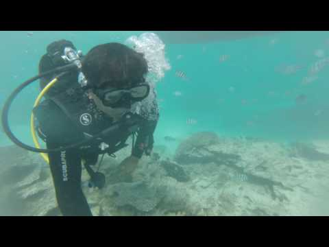 Video Under water experience at Mauritius-Beautifull World Down Under-Sanjay Rohida download in MP3, 3GP, MP4, WEBM, AVI, FLV January 2017