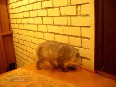 gatto suona il campanello per rientrare a casa!