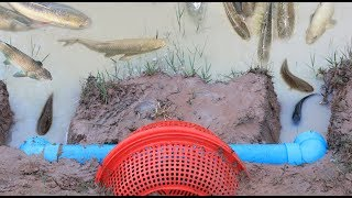 Hello Everyone! Greeting from Cambodia!Today i want to show you about: Smart Boy Catch A Lot Of Fish Using PVC Pipe With Basket Deep Hole Fish Trap in my village.If you enjoy this video click Thumb Up and Subscribe our CHANNEL for more videos;Follow me!Google Plus: https://goo.gl/7tltUZFacebook: https://www.facebook.com/7DDaily/Twitter: https://twitter.com/7ddailyPinterest: https://www.pinterest.com/7ddaily/Thank you for watching my video!