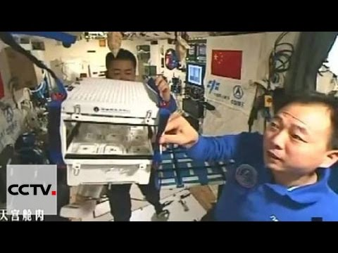 Chinese astronauts grow space lettuce for the first time