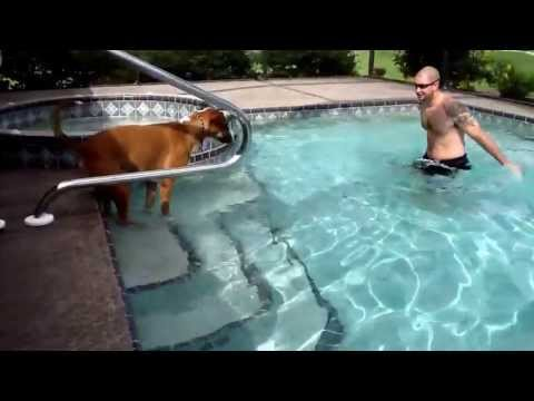 Chance the rescue dog learns to swim for the first time.